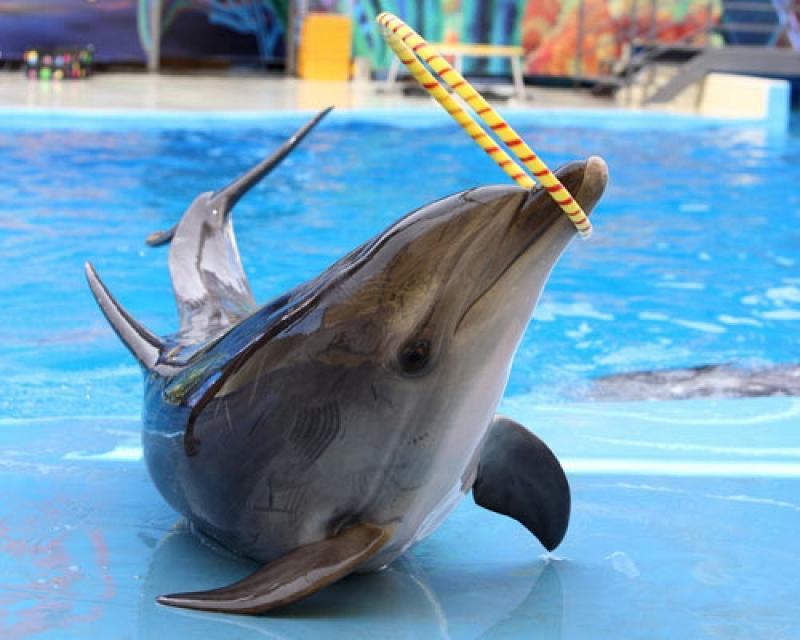 лучших традициях анапа дельфины картинки объединил множество людей